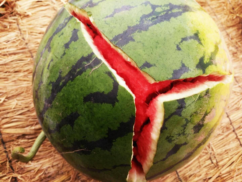 保定西瓜产地在哪里,清苑西瓜多少钱一斤-- 河北保定清苑韩氏西瓜代办