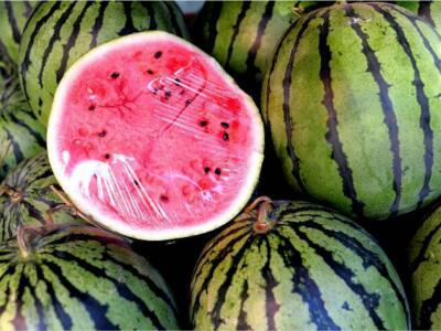 西瓜种子选择决定着着后期产量高低!瓜农一定要用好这些技巧!-- 河北保定清苑韩氏西瓜代办