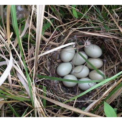 让土鸡蛋储存时间长的方法有哪些