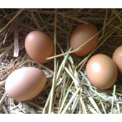 福州土鸡蛋批发销售 厂家直销