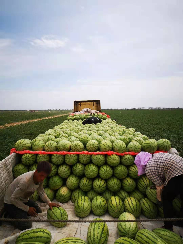 新疆文睿西瓜代办团队讲解新疆的西瓜为什么这么甜?-- 新疆文睿西瓜代办团队