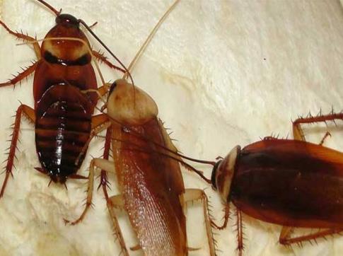 灭蟑螂公司真的有效吗?新乡灭蟑螂公司哪家好?-- 河南倍力环境治理有限公司