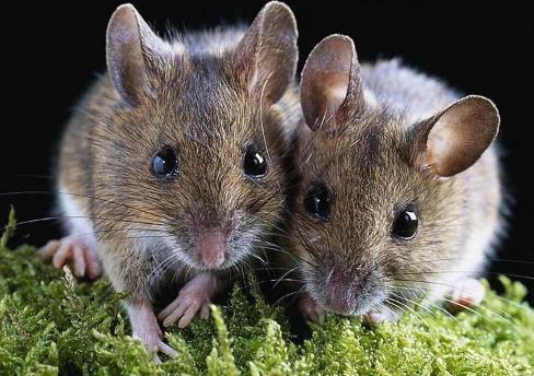 专业的灭鼠公司真的有用吗?新乡灭鼠哪家好?-- 河南倍力环境治理有限公司