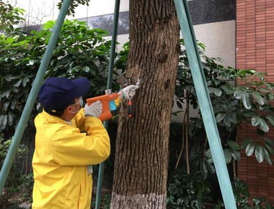 龙门县白蚁防治的方法具体有哪些-- 惠州通治环保科技有限公司